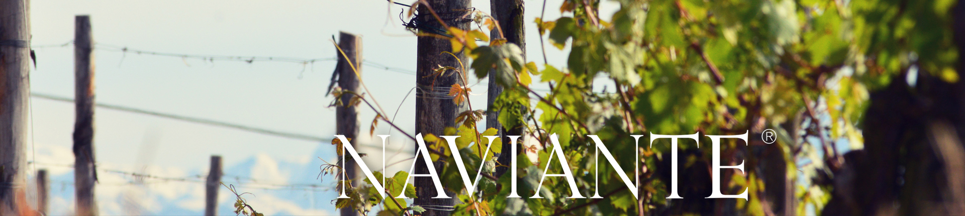 NAVIANTE -winery & vineyards